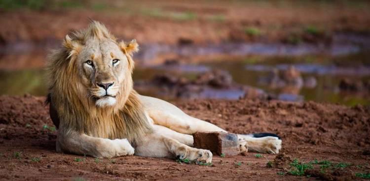 LION2_750_368_70_s