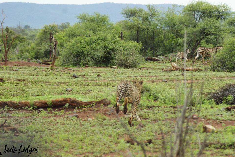Image by Thapelo Seleke